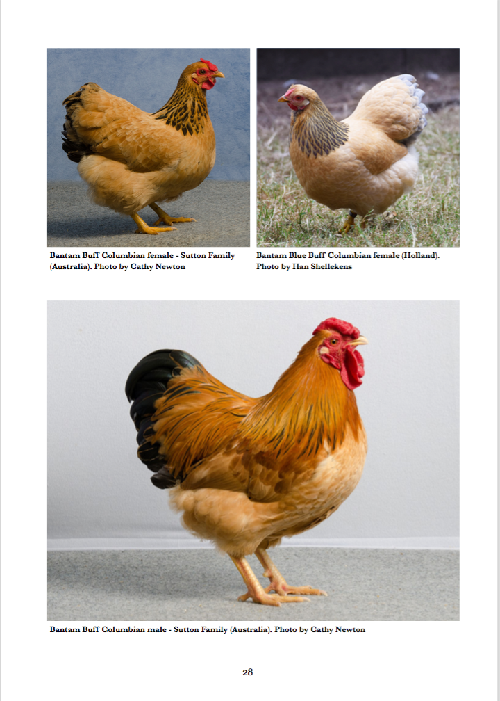 Buff Columbian Wyandotte Colour Breeding